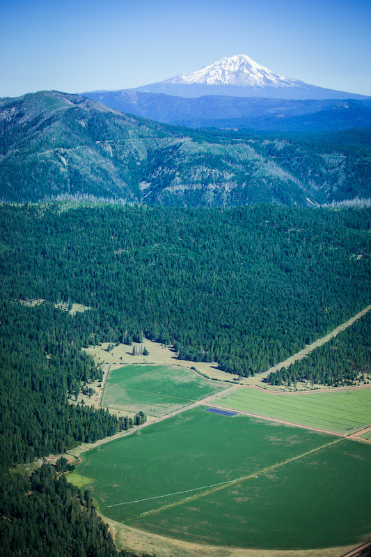 Goose Valley Farms